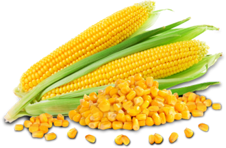 Image result for maize